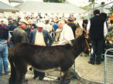 Killorglin Puck Fair, 2001.